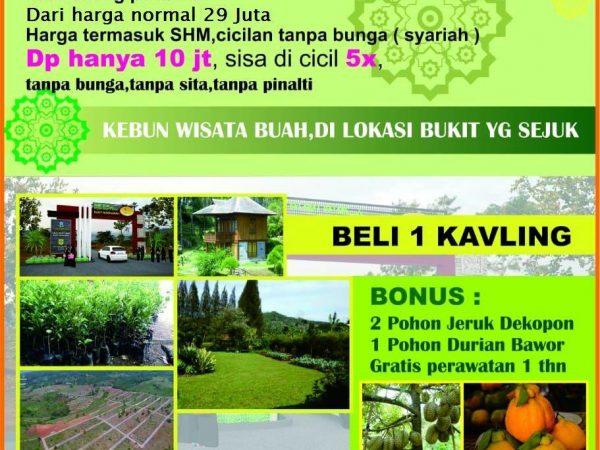 Kavling Kebun Duren & Jeruk Tanjungsari Bogor