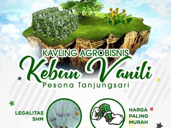 Kavling Kebun Murah Vanili Bogor